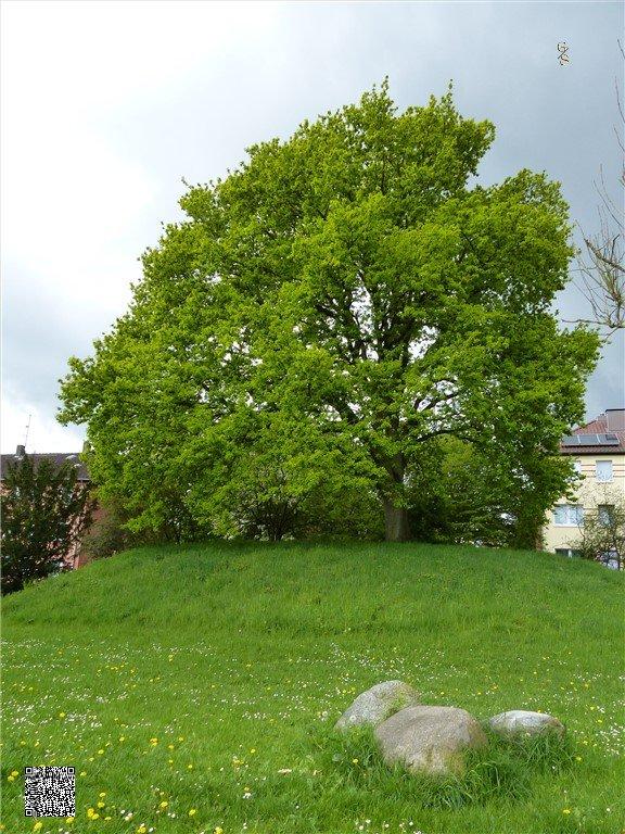 21 - Grafheuvel Marienthal