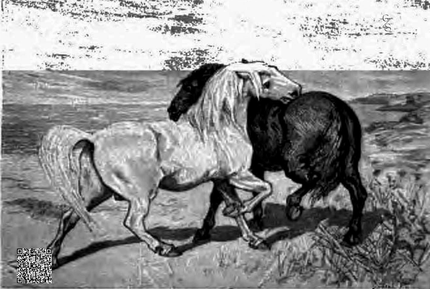 Das Weisse Und Das Schwarze Pferd-DE